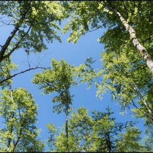 arbre ciel branche feuille