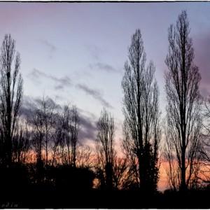 coucher de soleil Bourgogne France arbre ombre