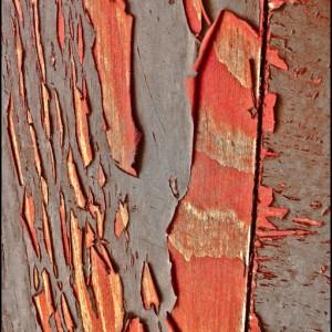 volet décapage bois copeau