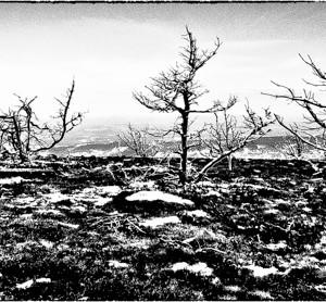 Lozère France aubrac paysage plaine arbre