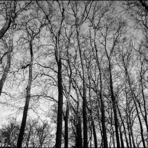 Parc château de Versailles arbre