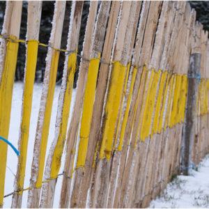 Palissage dans la neige