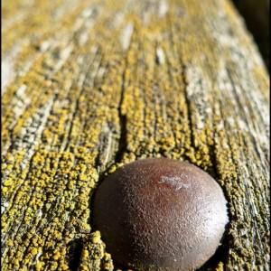 clou mousse rouille banc bois