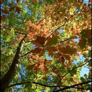 arbre branche feuille