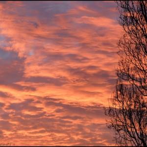 lever de soleil arbre nuage ciel Tanzanie Afrique