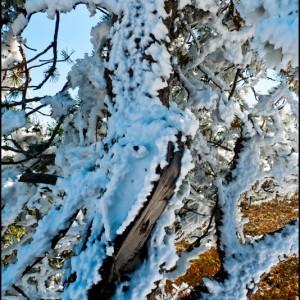 neige arbre Lozère France
