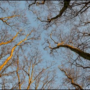 arbre branche