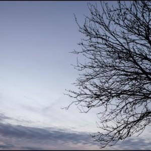 arbre branche lozère France