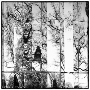 Reflets déformés des arbres dans les murs du château du (Parc de Rentilly)